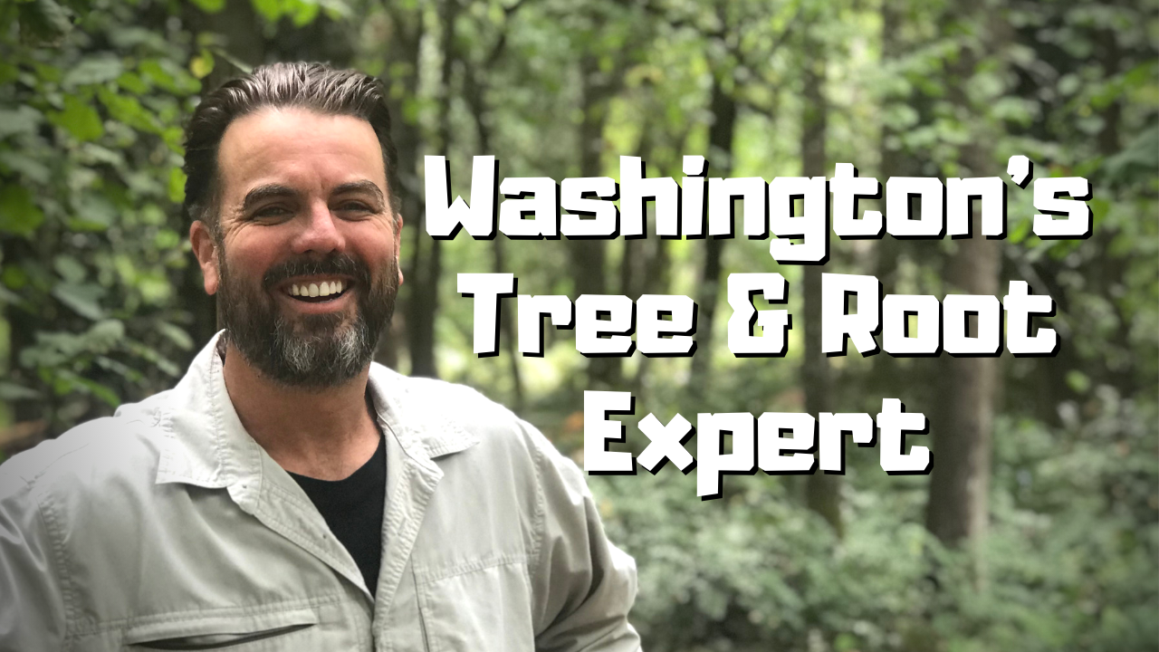 Root Cause Seattle - Washington's Tree & Tree Root Expert